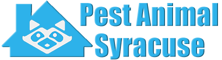 Syracuse Wildlife and Animal Removal